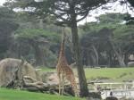 SF Zoo_May 2011 006