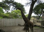 SF Zoo_May 2011 011