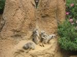 SF Zoo_May 2011 019