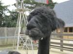 SF Zoo_May 2011 025