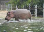SF Zoo_May 2011 026