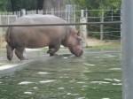 SF Zoo_May 2011 027