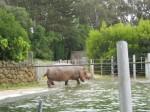 SF Zoo_May 2011 031